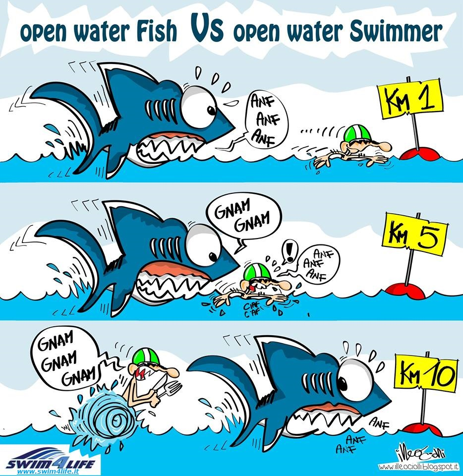 Open_Water_Fish_Vs_Open_Water_Swimmer